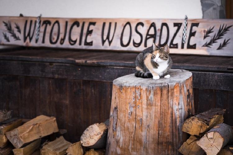 Pienińskie Herbarium, Osada nad Babieńskim Potockiem - Where will I sleep?