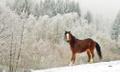 Horský ranč - Will I not be bored?